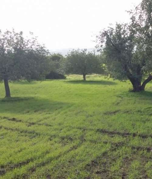 Land for Sale in Neo Chorio, Cyprus