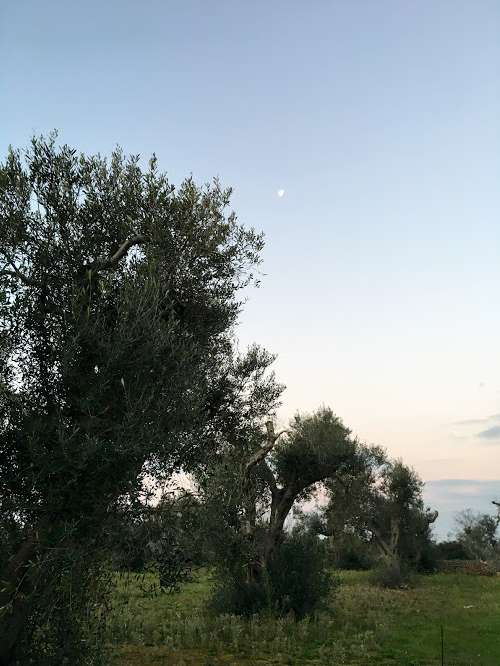 Land for Sale in Gallipoli, Italy